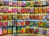 - 23rd Jan 2005 - Summer blooms