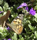 ISU Admin Bldg butterfly DSCN5935.jpg