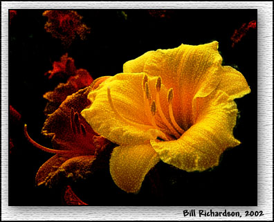 lillies w submatte (action)