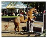 US Equestrian Team Talent Search