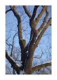 Tree II.