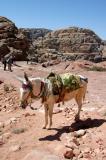 Highland Taxi, Petra