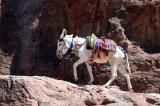 Donkey on the trial in Petra