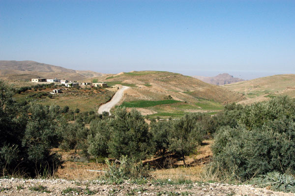 Olive Grove along the Kings Highway north of Wadi Musa