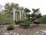 fountain, Pinus thunbergiana (Japanese Black Pine)