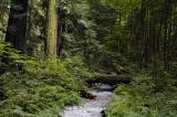 Goldstream Provincial Park, Victoria, B.C.
