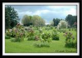 The Lilac Arboretum