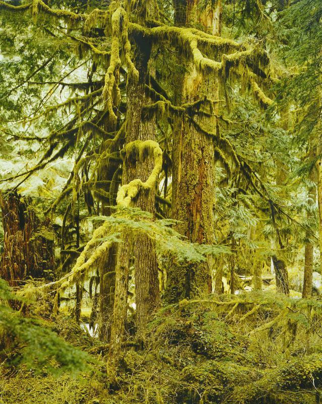 Tamihi forest, near Chilliwack, B.C.