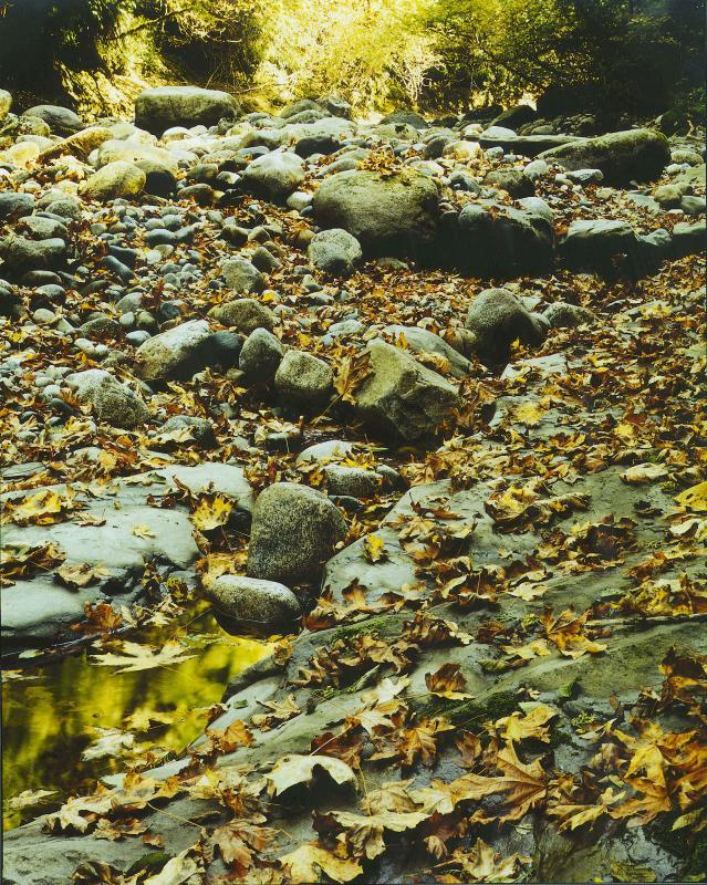 Kanaka Creek, Maple Ridge, B.C.