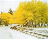 Aspens, first snowfall, near Cache Creek B.C.