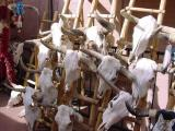 Cattle skulls outside a store in Santa Fe