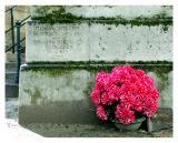 Memorial, Cimitiere Montmartre