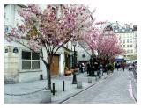 spring in the quartier latin