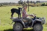Ubiquitous sheepdog