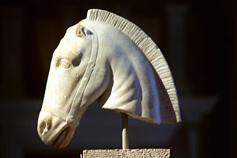 Horses head