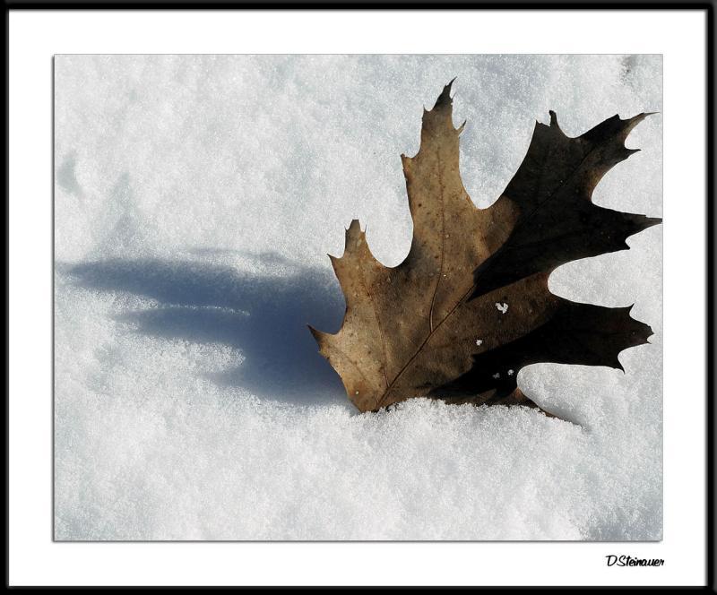 ds20050131_0031a1wF Leaf in Snow.jpg
