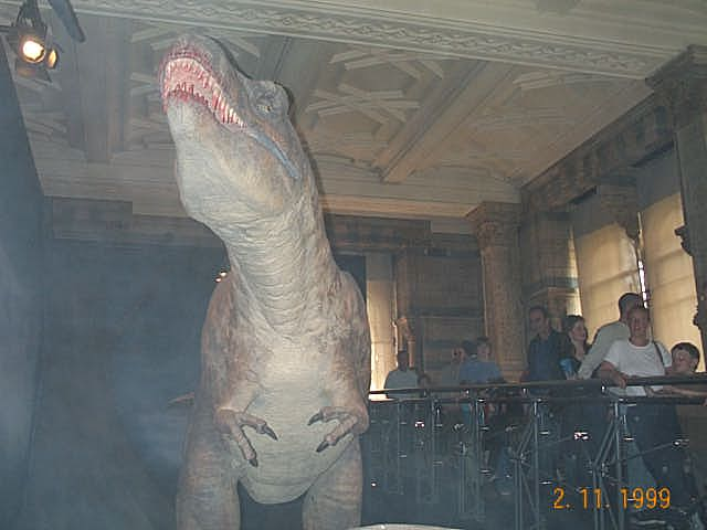 In the Natural History Museum