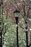 Pear & Apple Trees - LaGuardia Place Gardens