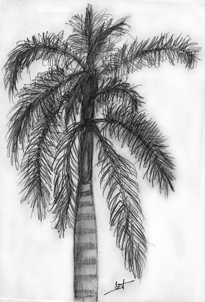 Palm tree sketch -from life-
