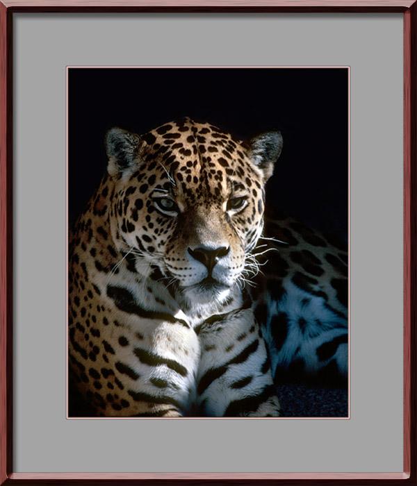 Jaguar, K25, LS2000
