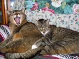 Norman & Eppy