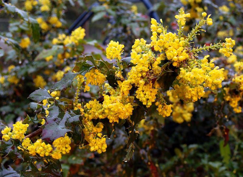 Yellow in Rain & Darkness