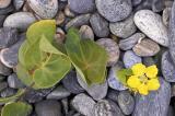 sea-flower.jpg