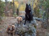 Linda and the autumn forest - Linda syksyisessä metsässä
