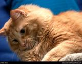 965-stock-image-cats.jpg