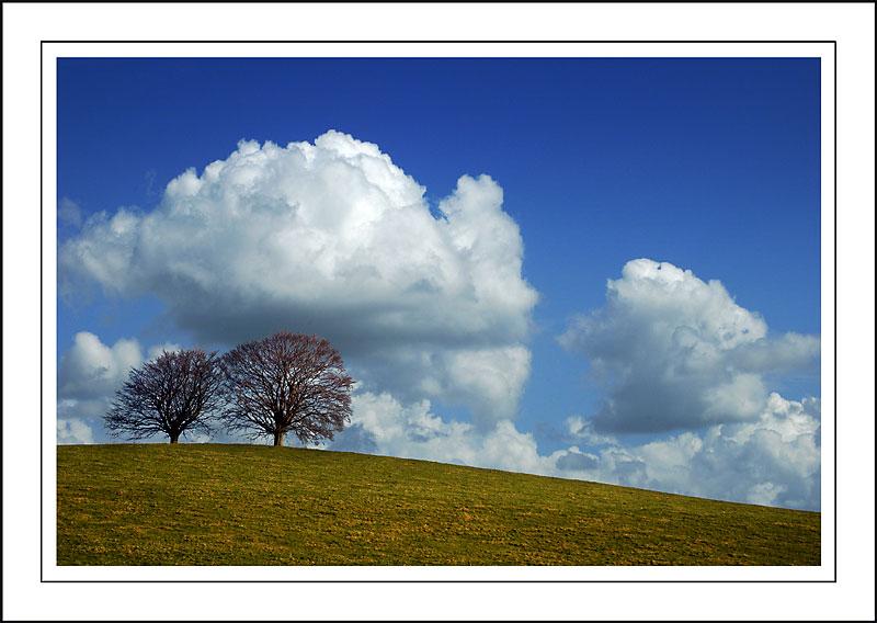 Trees near Stoke-sub-Hamdon, Somerset (1928)