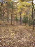 walnut_creek