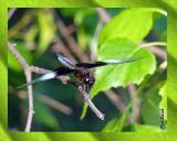dragon fly 1b.jpg