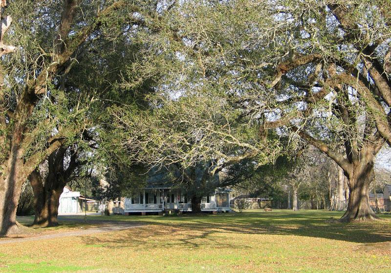 Reine House - Five Oaks