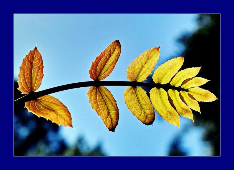 Glowing.Leaves.jpg