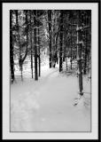 Winter 2005 06