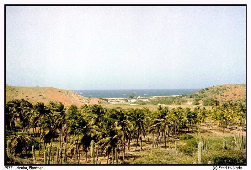 079-Aruba plantage copy.jpg