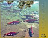Adam's River Sockeye