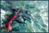 Flyoverfish