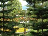 The Bahai Gardens 33.JPG