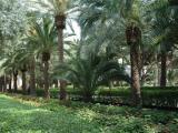 The Bahai Gardens 51.JPG