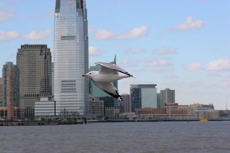 Liberty Seagull