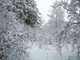 Its snowing again DSCN6119.JPG