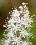 Foam Flower 3