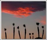 Palms and Fiery Cloud