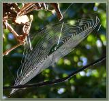 Spiderweb on vine