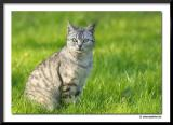 our-cat.jpg