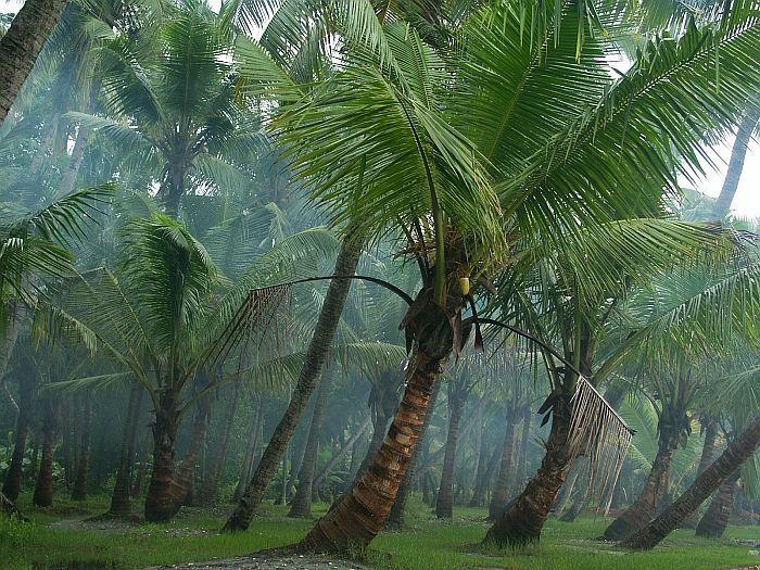 Kerala - Land of Coconut trees photo - Aaraj P. Thyagaraj ...
