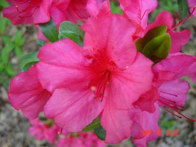 Garden State Red