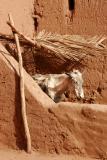 Ait Benhaddou Donkey