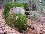 Bearded Rock